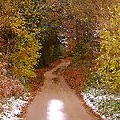 Snowy lane by Mike  Waldron