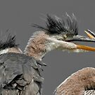 Sibling Rivalry by Bill Maynard