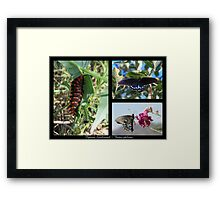 Butterfly Collage ~ Pipevine Swallowtail Framed Print