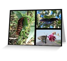 Butterfly Collage ~ Pipevine Swallowtail Greeting Card