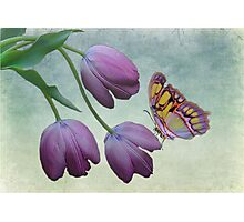 Butterfly Beauty Photographic Print