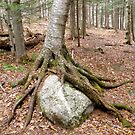 rock hug by elh52