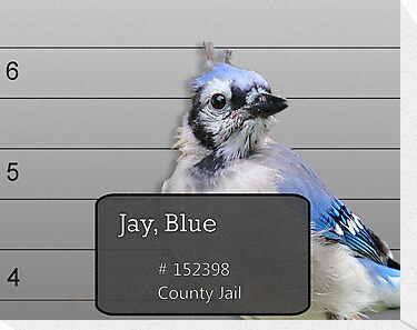 Another Jail Bird by Brian Dodd