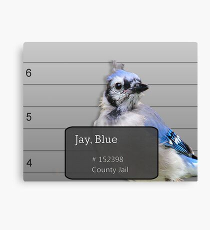 Another Jail Bird Canvas Print