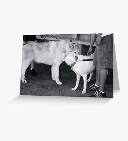 Loving Huskies - Lake Arrowhead, CA Greeting Card