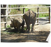 African Tails - Black Rhino Mother and Daughter Poster