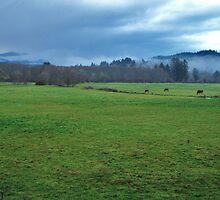 The Pasture....Otis, Oregon by trueblvr