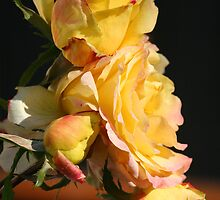 Yellow Rose Of Elizabeth Two by Terry Aldhizer