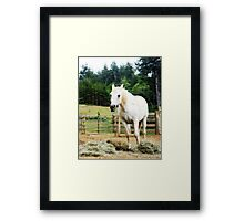 Country Horse Framed Print