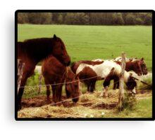 Tranquil Pastures Canvas Print