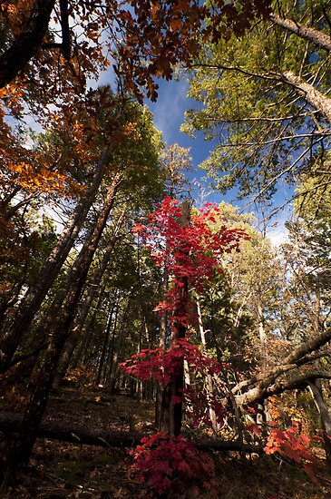 Red and Green by Mitchell Tillison