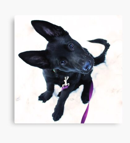 Silly Puppy Canvas Print