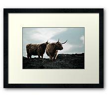 higland cows together Framed Print