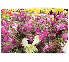Floral Cabbages Poster