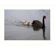 Black Swan and cygnets Art Print