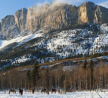 Horses under Yamnuska by zumi