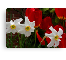 jonquil third wheel Canvas Print