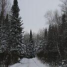 Winter Wonderland by TaraHG