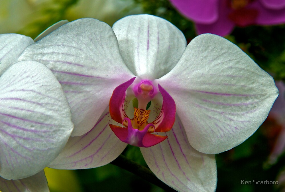 Orchid by Ken Scarboro