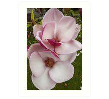 tulip magnolia twins Art Print