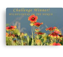 DRAFT WOW CHALLENGE WINNER Canvas Print