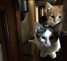 Cats on a cabinet by marypilkinton