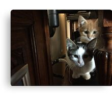 Cats on a cabinet Canvas Print