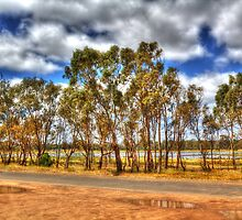 trees in lake fyans by ashara
