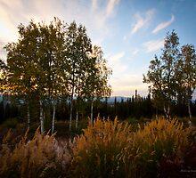 Setting Sun On Seasonal Change by Melissa Seaback