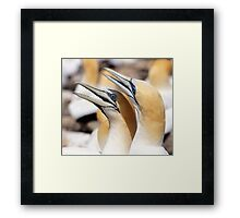 happy pair Framed Print