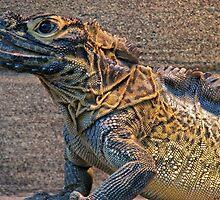 Philippine Water Dragon by Dave Cauchi
