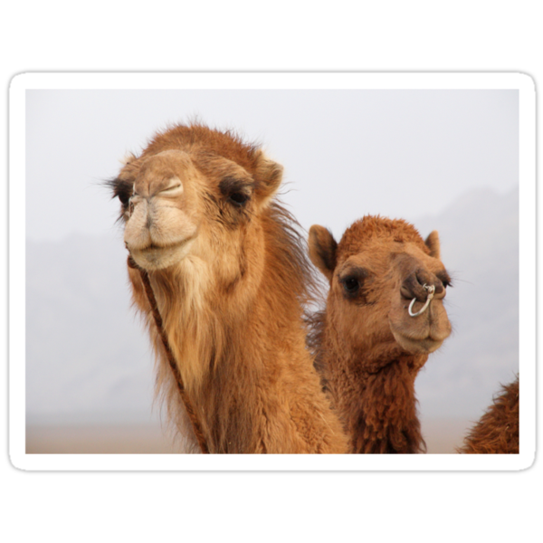 Camels by Gillian Anderson LAPS, AFIAP