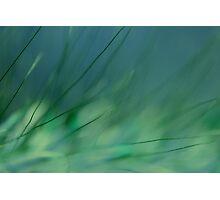 Grasland Photographic Print