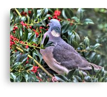 Holly Pigeon Canvas Print