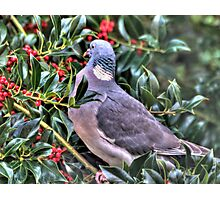 Holly Pigeon Photographic Print