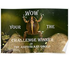 Banner Amphibians group Poster
