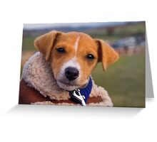 Wrapped Up Greeting Card
