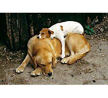 Sleeping dogs, UK, 1980's. Photographic Print