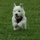 Leapy Puppy by Harvey Schiller