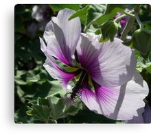Backlit Purple Canvas Print
