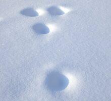 Snow holes by Bluesrose