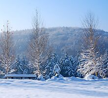Winter trees by aginia