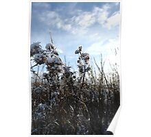 Snow #07 Poster