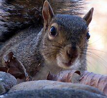 Nosy Squirrel by Jean Gregory  Evans