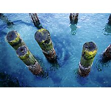 lichen pilings Photographic Print