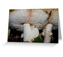fabulous funky fungi Greeting Card