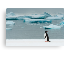 Gentoo on Ice Canvas Print