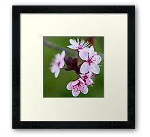 Blossom. Framed Print