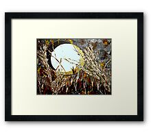 Moonlite Framed Print