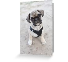 Cute puppy looking up Greeting Card